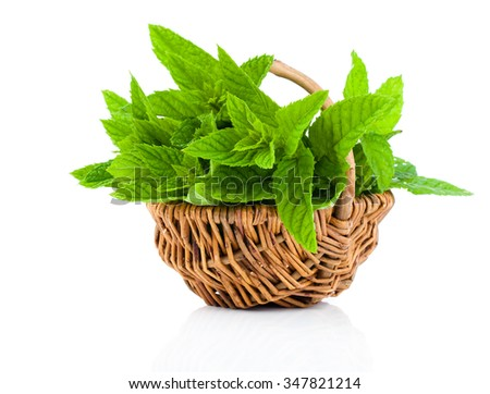 Bundle of fresh spearmint in a wicker basket, on a white background - stock photo