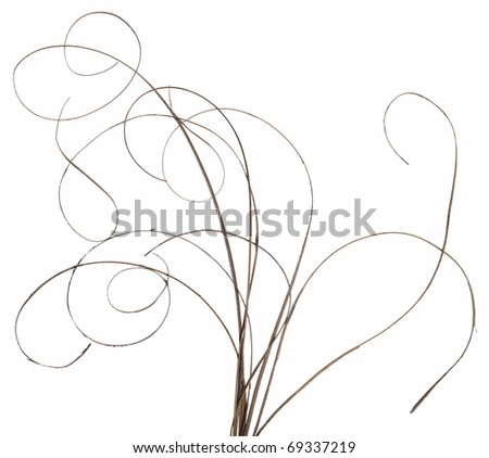 Bundle of thin ornamental curly sticks. Very high-res. Clean edges, no shadows. - stock photo
