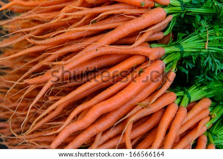 Bundled Organic Carrots  - stock photo