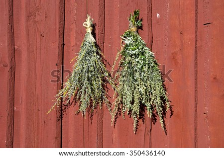 Bundles of fresh herbs hanged to dry outside on a wooden wall - stock photo