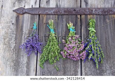Bundles of fresh medical tied herbs hanging on the wooden antique door - stock photo