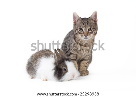 bunny and kitten, isolated on white - stock photo