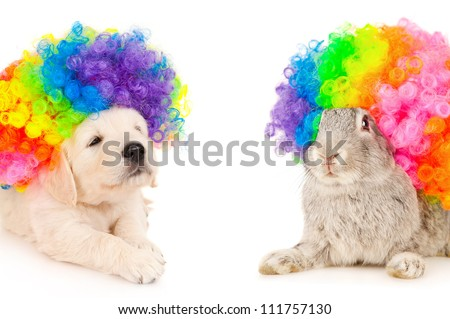 Bunny and puppy in wigs clown, isolated on white - stock photo