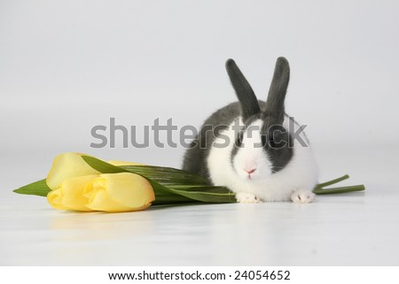 Bunny and Yellow Tulips - stock photo