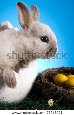 Bunny, Easter animal - stock photo