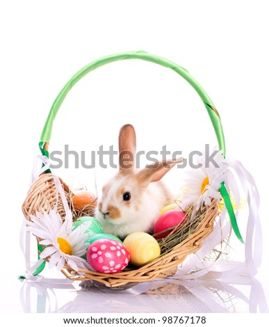 Bunny in easter basket with easter eggs isolated on white - stock photo