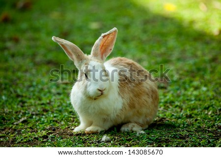 Bunny in the grass field. - stock photo