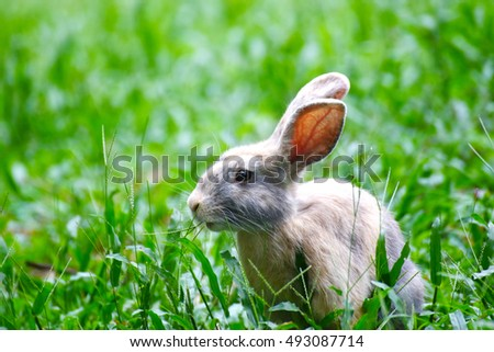 bunny rabbit eating grass in the garden