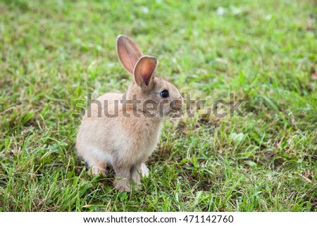 Bunny rabbit on the grass. Close up.