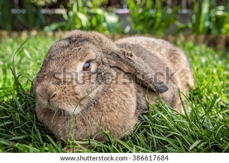 Bunny sitting in grass.