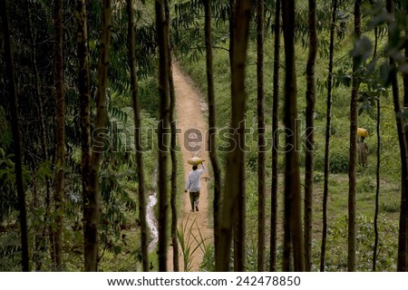 BURERA, RWANDA - SEPTEMBER 2008: Villager seen through eucalyptus trees. Rwanda today is a story of renewal and rapid economic development; only 20 years ago the country was torn apart by the genocide