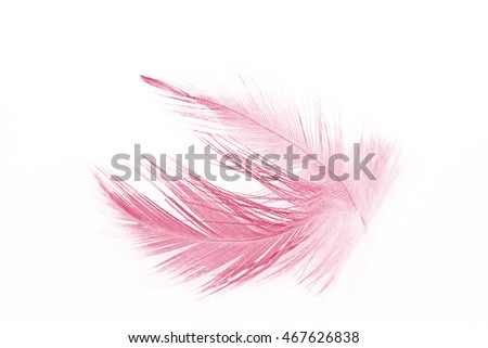 Burgundy red vintage color trends chicken feather texture background