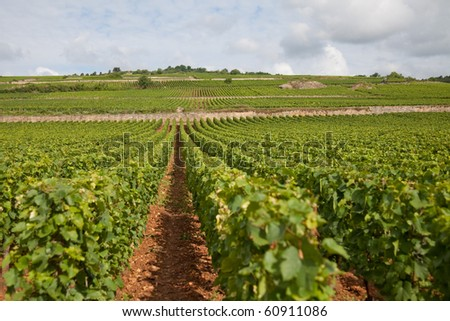 Burgundy vineyards, origin of some of the worlds most exclusive wines
