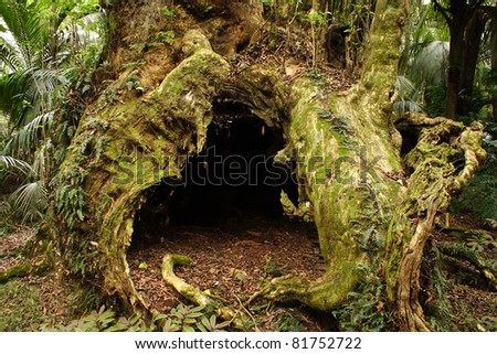 Burial tree or Taketakerau in the Hukutaia Domain in the Bay of Plenty on the North island of New Zealand - stock photo