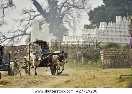 Burmese farmers driving an oxcart are coming to unloading a boat of food and materials along the Irrawaddy river near Bagan, Myanmar (Burma). - stock photo