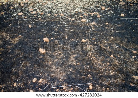 burn with fire ground in wild. dry plants and foliage on a black ground - stock photo