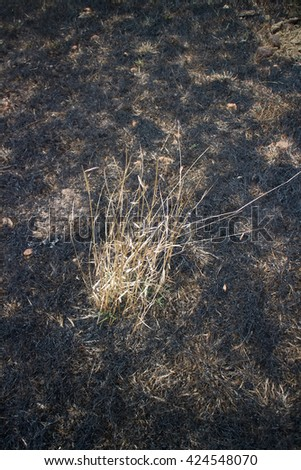 burn with fire ground in wild. dry plants  on a black ground - stock photo