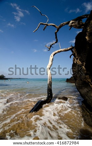 Burned dry wood at Puako beach, Big Island, Hawaii - stock photo