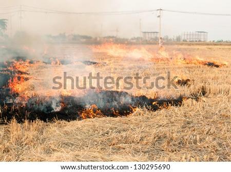 Burned fields - stock photo