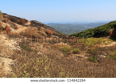 Burned grass in the mountains of Greece