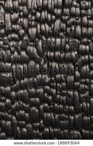 burned oak wood background - stock photo