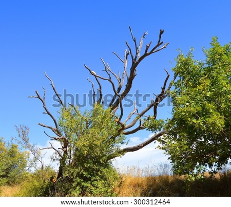 Burned tree, hit by lightning - stock photo