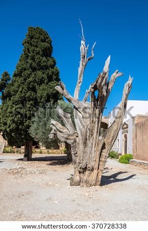 Burned tree in courtyard of the Monastery Arkadi in Crete, Greece. - stock photo
