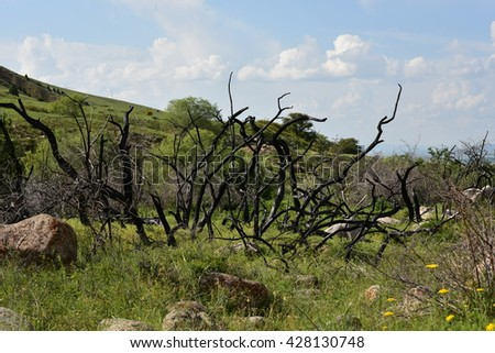 burned trees in mountains - stock photo