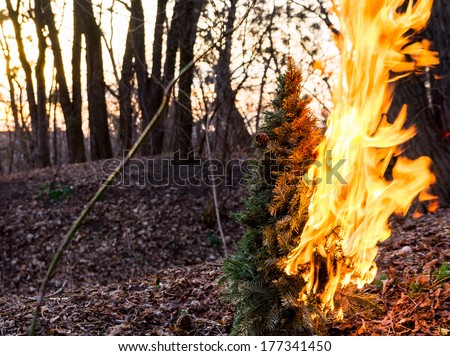 Burning Christmas tree at sunset in the wood - stock photo