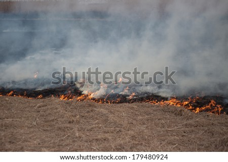 Burning dry grass - stock photo
