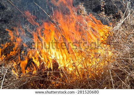 burning dry grass close up - stock photo