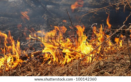 Burning dry grass in a forest