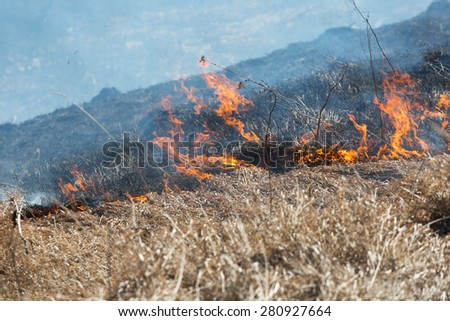 burning dry grass reason of forest fires - stock photo