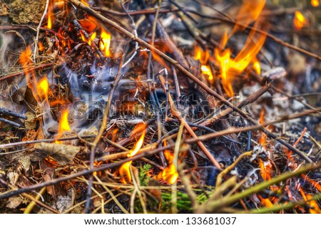 Burning fire in forest
