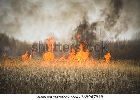 burning grass - stock photo