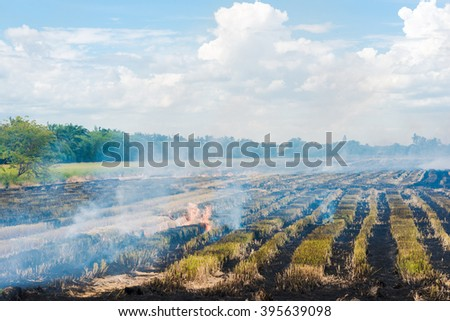 Burning in rice to start a new planting season, Burning straw stubble farmers - stock photo