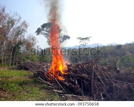 Burning old rubber trees log. The cheapest way to clear the fields for new plantation which can cause haze at surrounding area. - stock photo