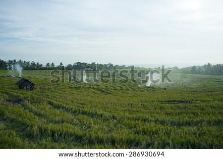 Burning rice fields in Bali island, Indonesia - stock photo
