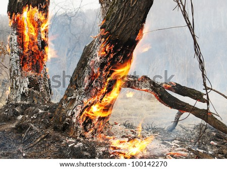 Burning trees in the forest - stock photo
