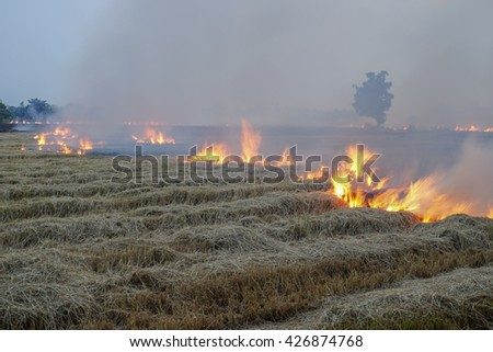 Burning with fire, irresponsible choice to get rid of stubble in rice field in countryside, causes smoke, flame, disaster, ash, black and polluted smoke in sky, and it is not environmentally friendly