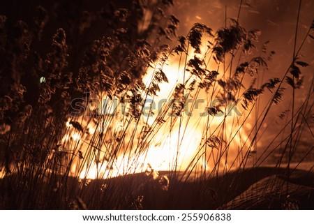 Burning wood house. Ruins. Dark night. Grass silhouettes. - stock photo