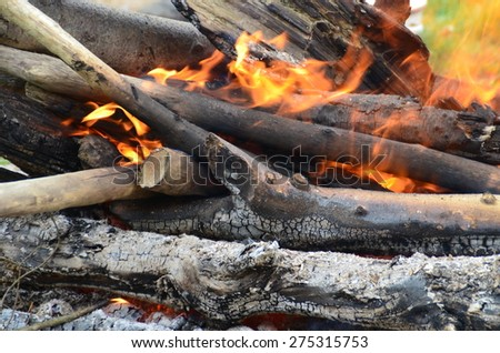 Burning woods in fire pit