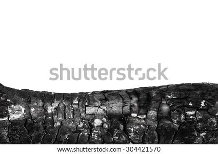 Burnt bark tree isolated on white background - stock photo