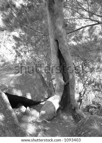 burnt out tree - stock photo
