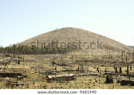burnt trees at a hill base along the San Francisco Peaks