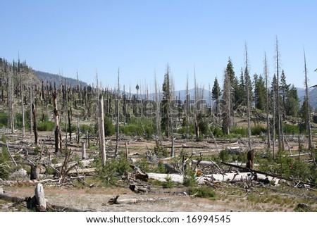 Burnt Trees in a Mammoth Lakes, CA - stock photo