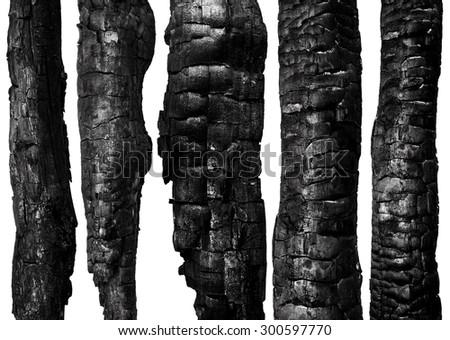 Burnt wood isolated on white background. Set - stock photo
