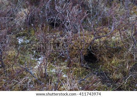 Burrow entrance of european water vole - stock photo