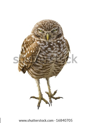 stock-photo-burrowing-owl-isolated-16840