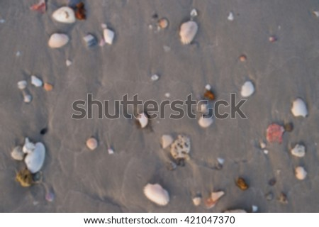 Burry Sea shells, starfish and crab on beach sand for summer and beach concept. Studio shot beach background. - stock photo